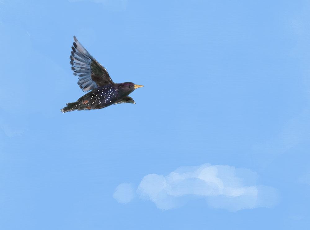 Illustration of a black bird in mid flight against a blue sky.