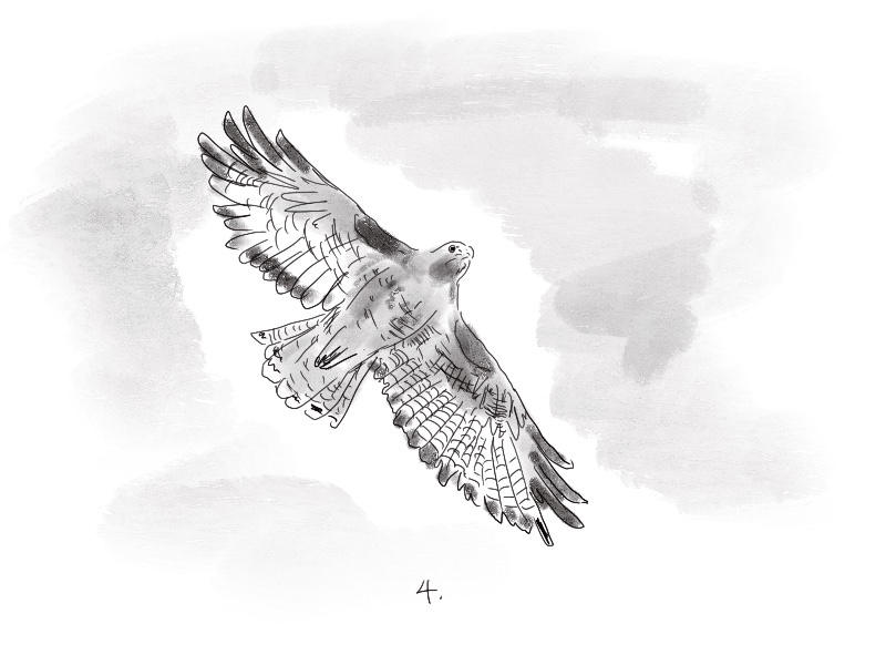 Black and white illustration of a bird in flight, labeled, '4.'